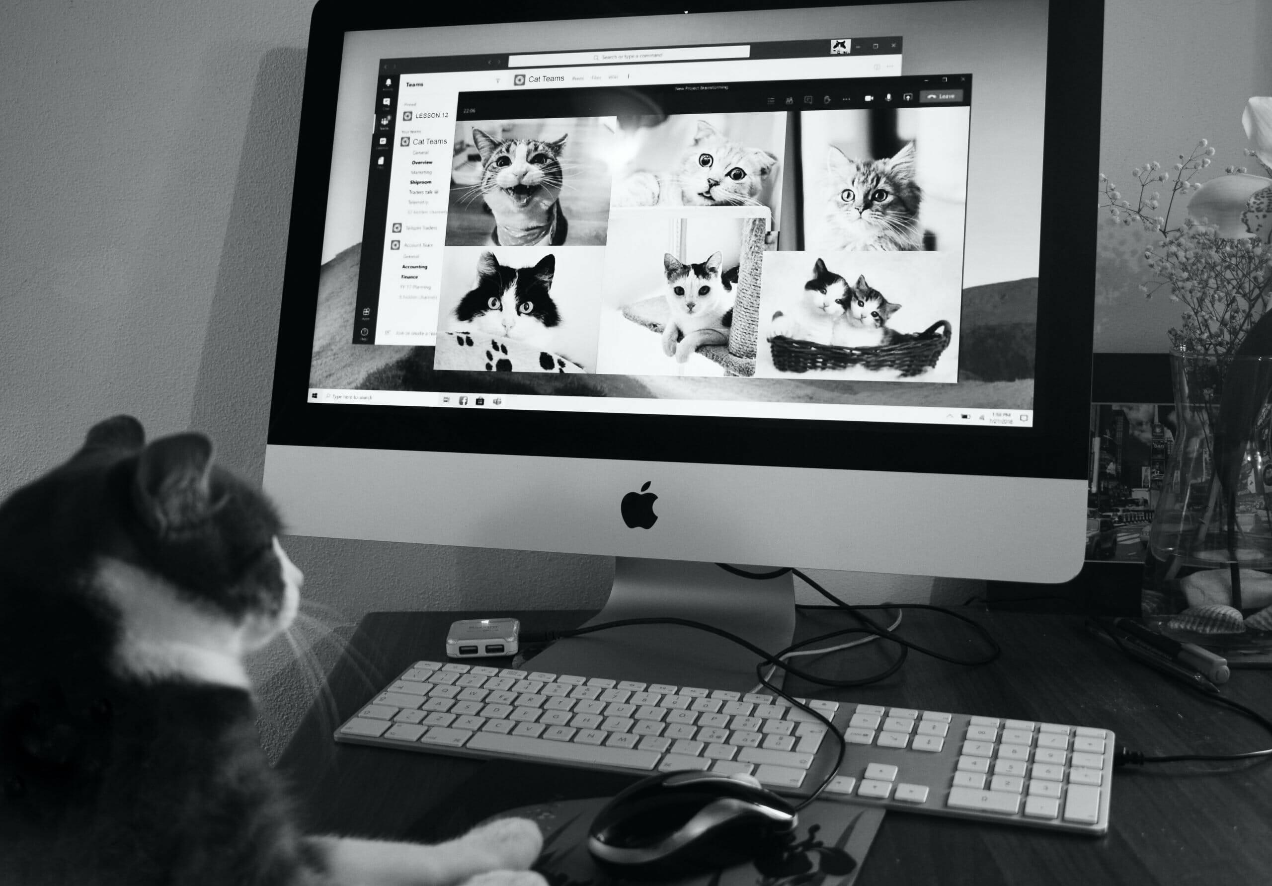 Cats googling Cats - meet our new digital marketing apprentice, Cat Grimshaw - Cameo Digital